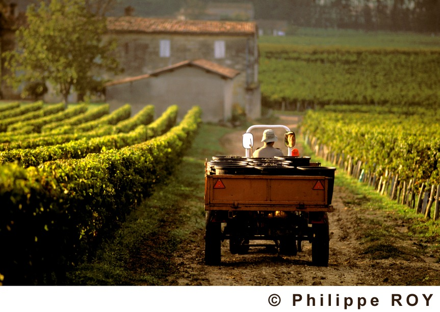 Where to S.I.P. affordable BordeauxWine!