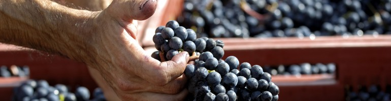 Bordeaux 2012; the key to making ripe fruity wines this year