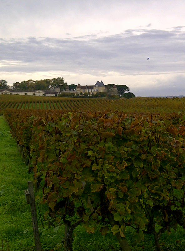 A Case of 'Rotten Luck' for the sweet wine producers of Bordeaux?