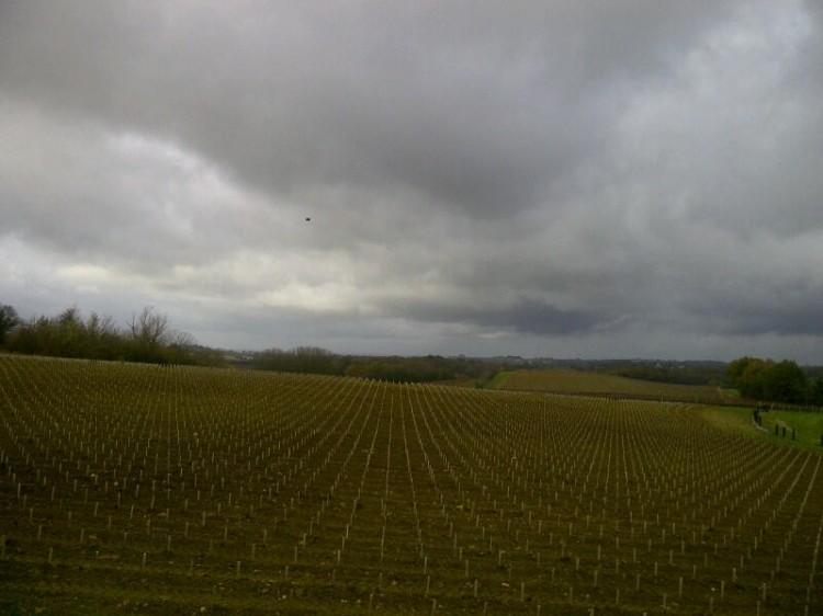 Saint-Etienne-de-Lisse-20121203-02893