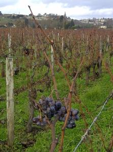 Saint-Emilion-20121203-02909