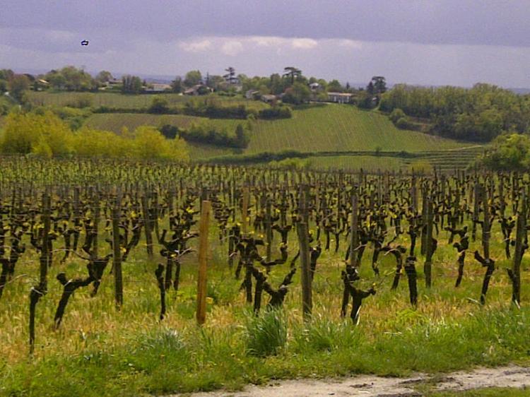 Saint-Michel-de-Fronsac-20120424-00931