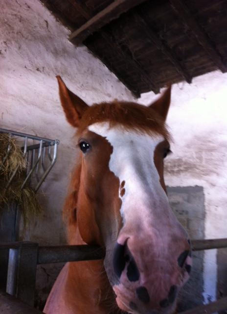 5 horse power at PontetCanet
