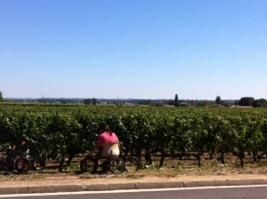 Deleafing both sides of the bunches of grapes in St Emilion