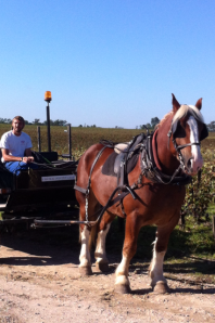 Turbo and his driver at Pontet Canet harvest 2013