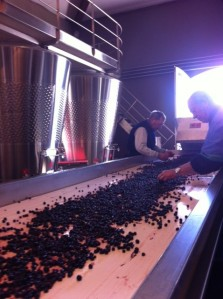 Beausejour Becot St Emilion, detailed sorting by hand