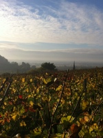 Fronsac: the Renaissance of a Forgotten Wine Region