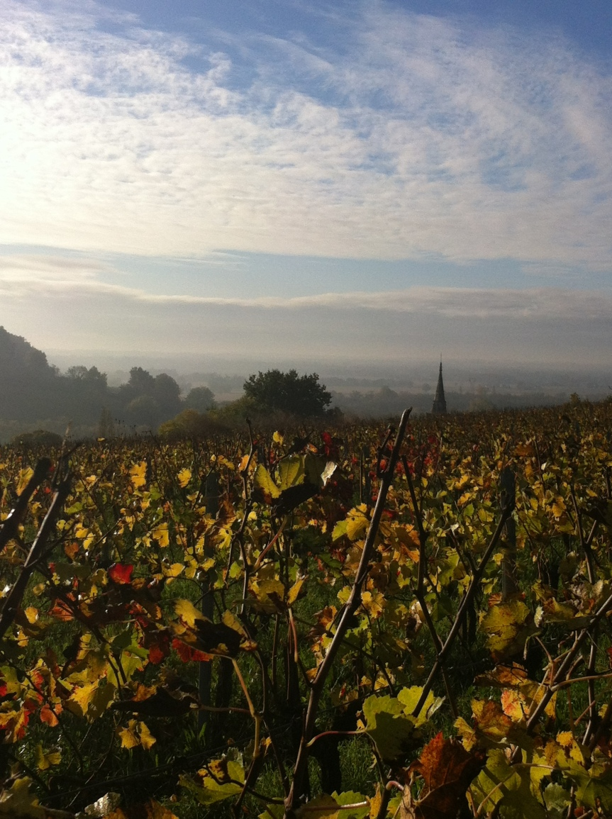 Autumn; a wonderful time to visit Bordeaux