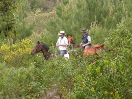 horse woods