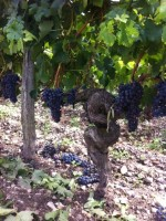Bordeaux 2014: the sun has finally arrived, some catch-up todo