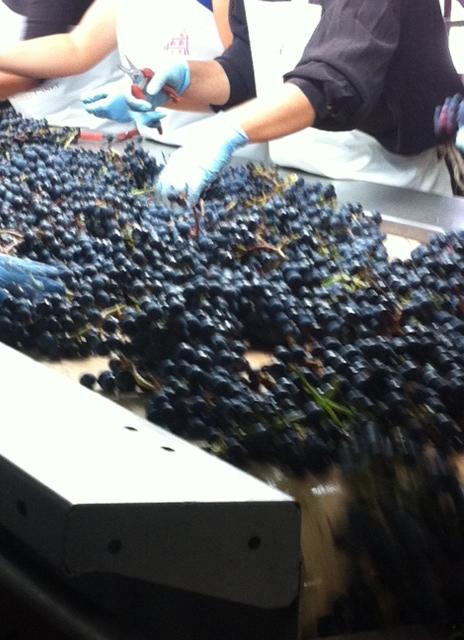 6 weeks of Sunshine in Bordeaux raises hopes for2014
