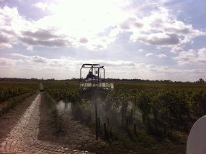Spraying manure at biodynamique Pontet Canet after the harvest to stimulate the roots