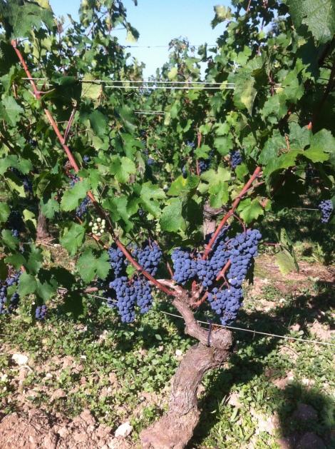 2015 Bordeaux Caribbean Summer, Indian one tofollow?
