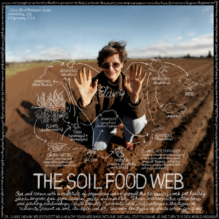 How nature makes nutrients available to plants in healthy soil