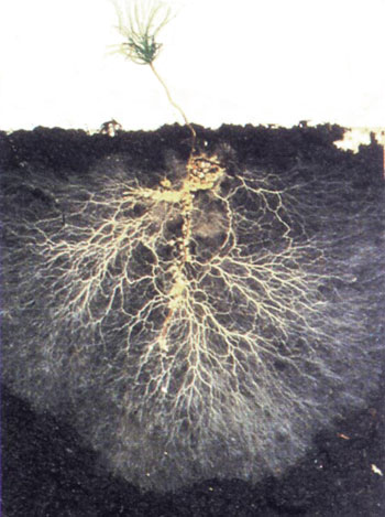 The Soil is Sick – bring it back tolife