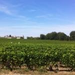 2016 Bordeaux lookinggood