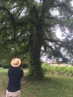 Biodynamics in the shade of a big Elm Tree in Castillon
