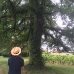 Biodynamics in the shade of a big Elm Tree inCastillon