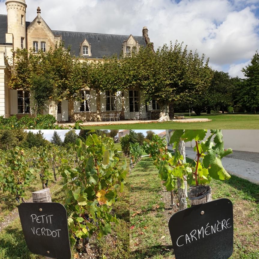 Do we need new grape varieties inBordeaux?