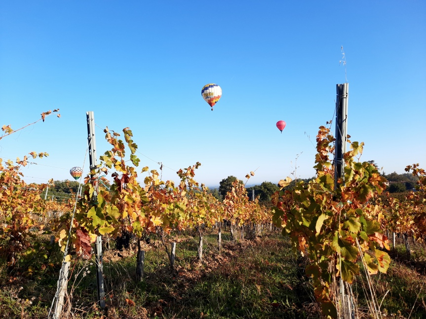 The Lucky Grapes of 2021 BordeauxHarvest